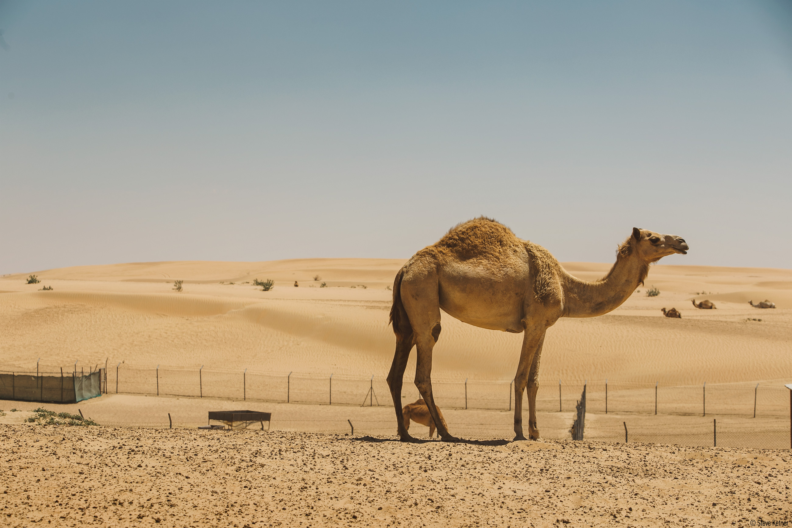Desert fun drive - Nissan Patrol